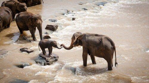 Trompe d'éléphant aspirant à 540 km/h
