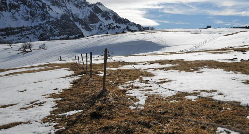 Au plateau de Cenise (3)