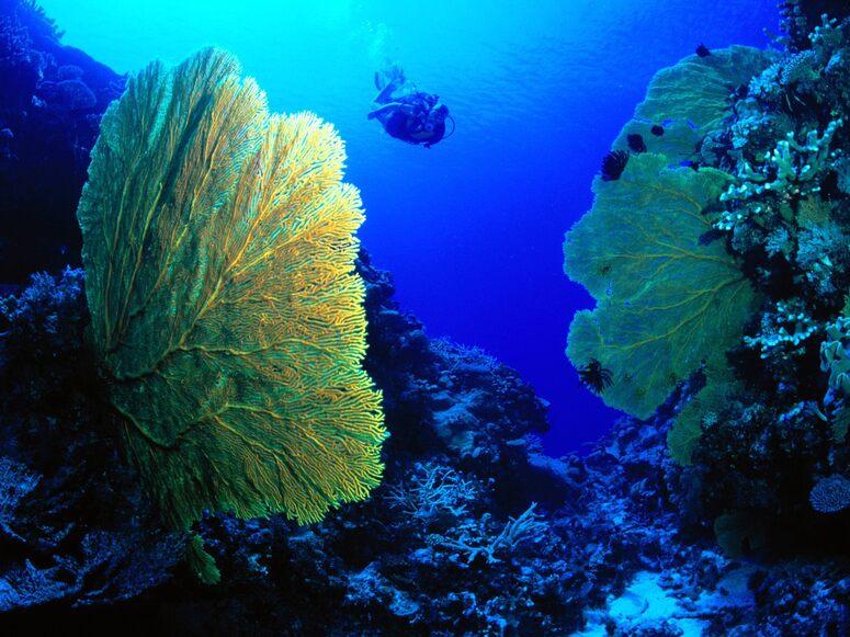 Les habitants de l'océan - 15 images