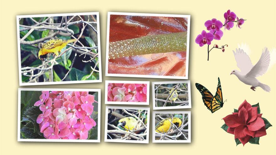 Oiseaux et fleurs dans mon jardin (1/3)