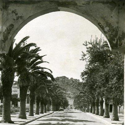 L-allee-de-palmiers-prise-du-Bordj.jpg
