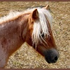 Petit cheval.jpg
