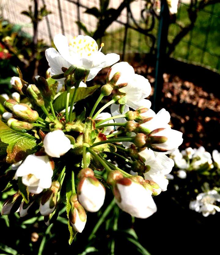Des arbrisseaux et fleurs.