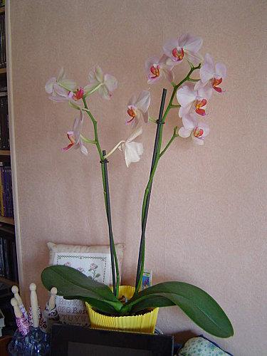 orchidee-1.jpg