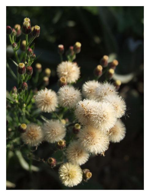herbes-1