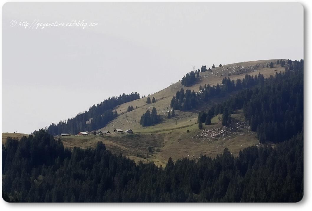 Balade en Haute-Savoie (1/2)
