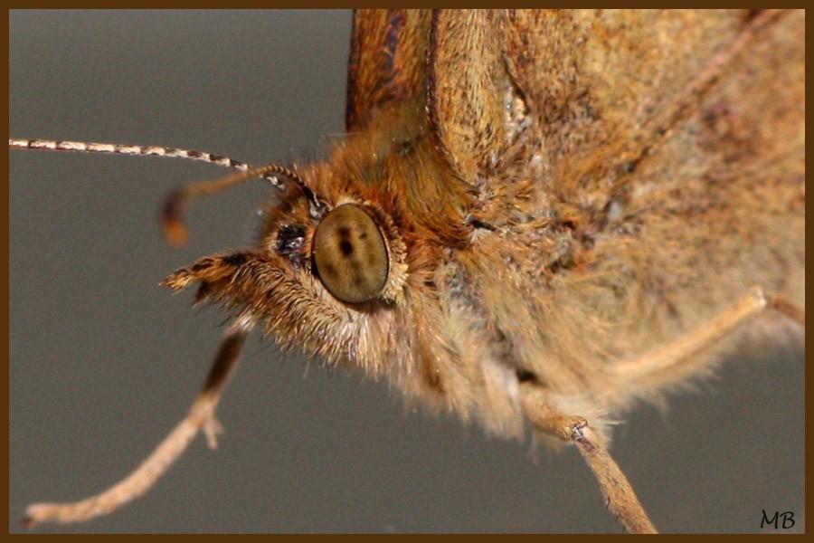 Insectes-03-4576-a.jpg