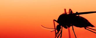 Trois femmes enceintes infectées par le Zika au Québec