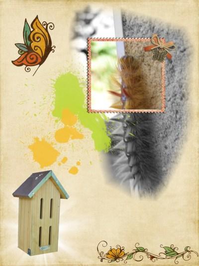 Blog de chipiron :Un chipiron dans les Landes, Chenille de la noctuelle de l'érable