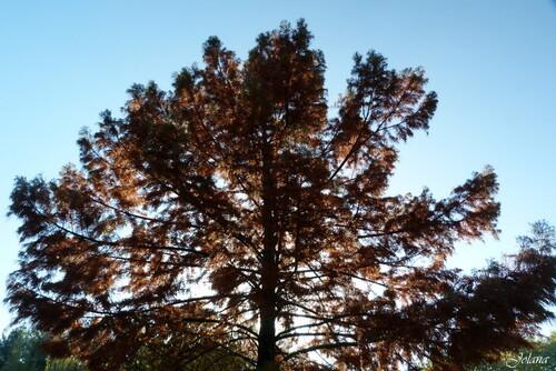 couleurs automnes