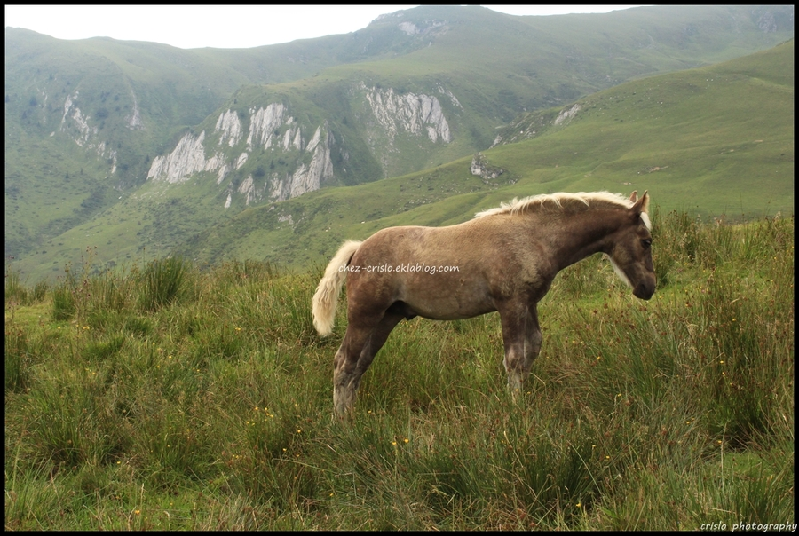 A tous ceux qui aiment les chevaux...