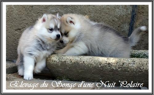 Portées Féanor et Fanouk (19 mars 2014)