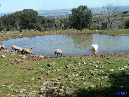 En campagne.....avec le troupeau