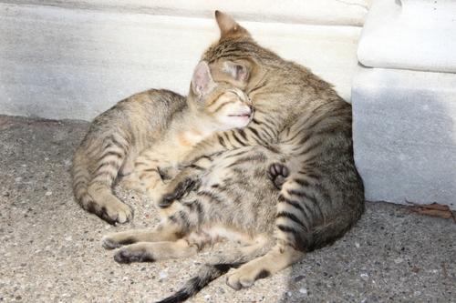 Les chats d'Istanbul