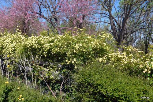 Les fleurs de mon jardin en avril ...