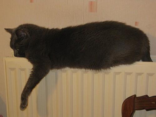 Mon-chat-et-les-autres 0012