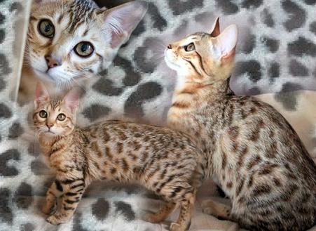 H'ograceGladys8295753-bw-leopard-peau-arriere-plan-ou-la-texture-grande-resolution