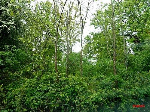 nature humide-border