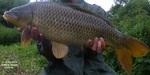 Pêche carpe 2013