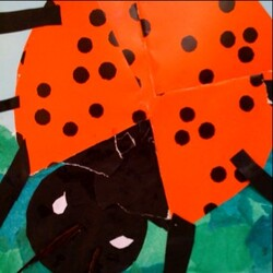Galerie d'insectes