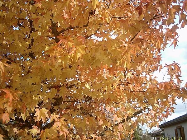 26 novembre arbre jaune et rouge-copie-1