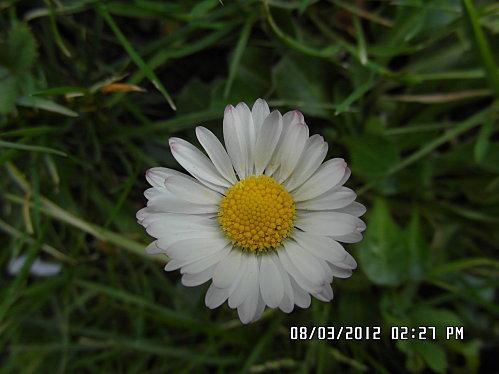 Fleurs-8-Mars-12-006.JPG