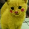 Chaton Pikachu ^^ trop kawaiii!!!