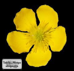 Flower's 4.