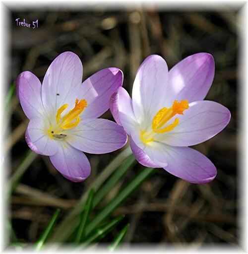 Pour vous remercier des vos gentils commentaires...quelques fleurs.