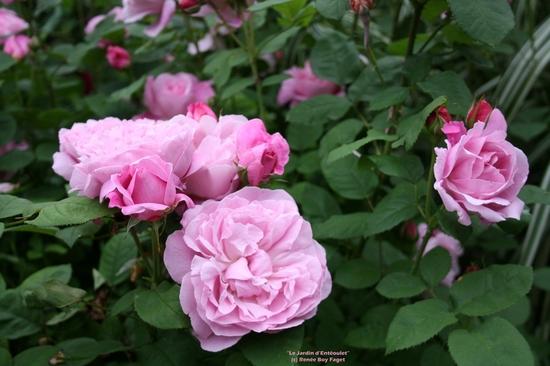 30-mai-2015.8-R.'Mary-Rose'