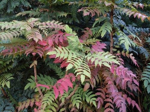 Eté automne, couleurs mêlées