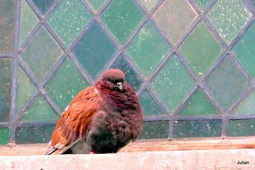 Un mur et des pigeons