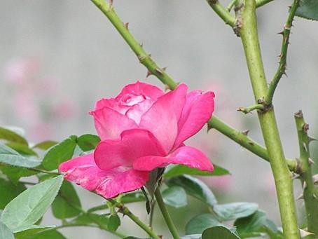 fleurs-6601.JPG
