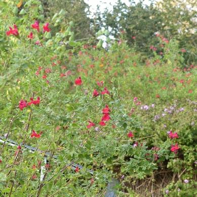 Jardins d'Hyères : le parc Sainte Claire...