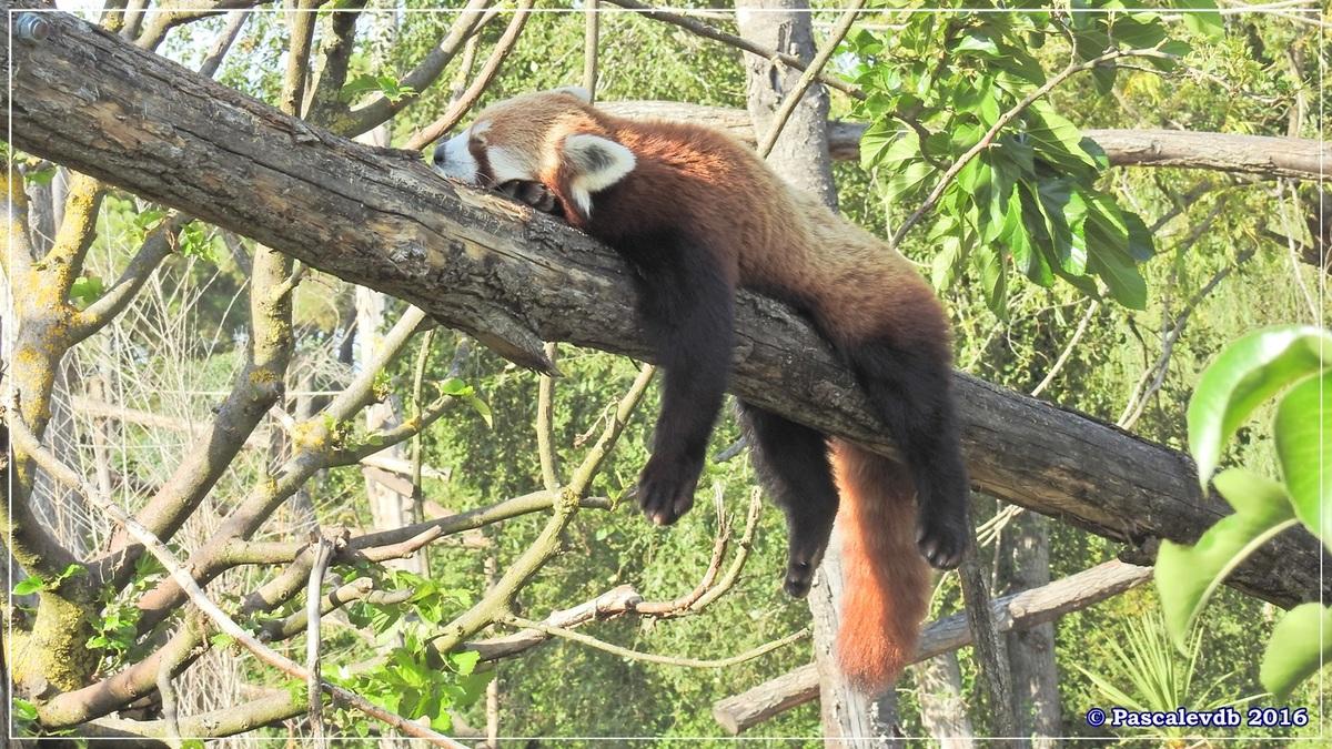 Zoo du Bassin d'Arcachon - Août 2016 - 15/15