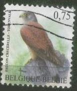 faucon-crecerelle-copie-1.jpg