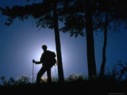 Backlit Hiker Near Trees, Waterton Lakes National Park, Alberta, Canada Photographic Print par Gareth McCormack