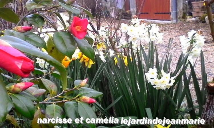 dans mon jardin c'est le printemps,tout fleuri et j'ai ouvert les grilles de ma maison