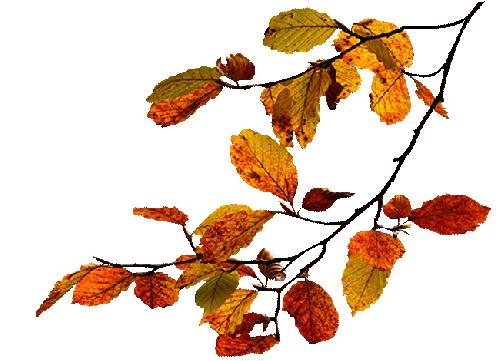 les plantes ou feuillage