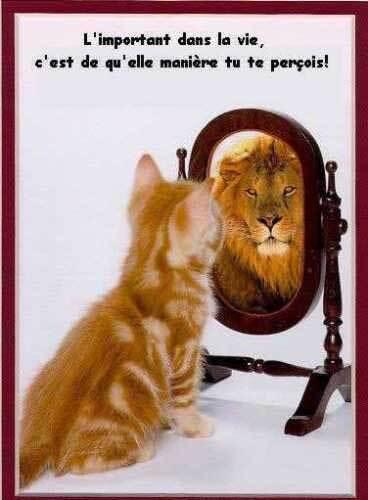 chat-en-lion.jpg