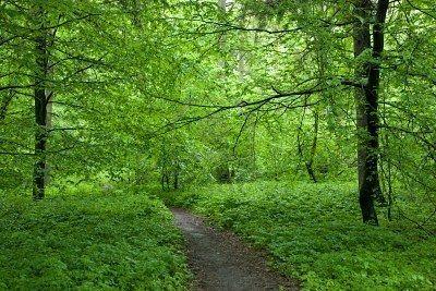 forest-verte.jpg