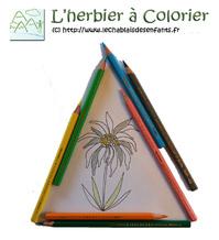 L'herbier à colorier