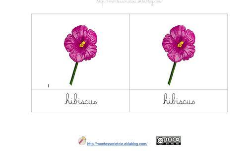 Nomenclatures : Fleurs (Safari LTD)