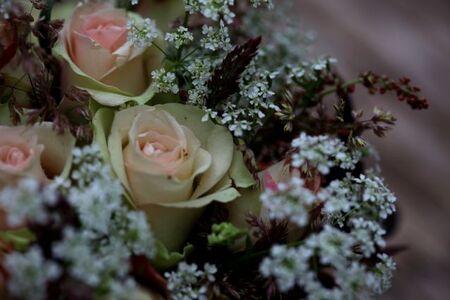 Roses à la Chantilly