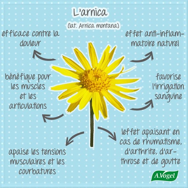 Arnica montana : une fleur précieuse