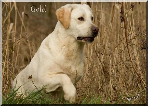 Mon chien à 7 ans c'est un chien du refuge ! Gold