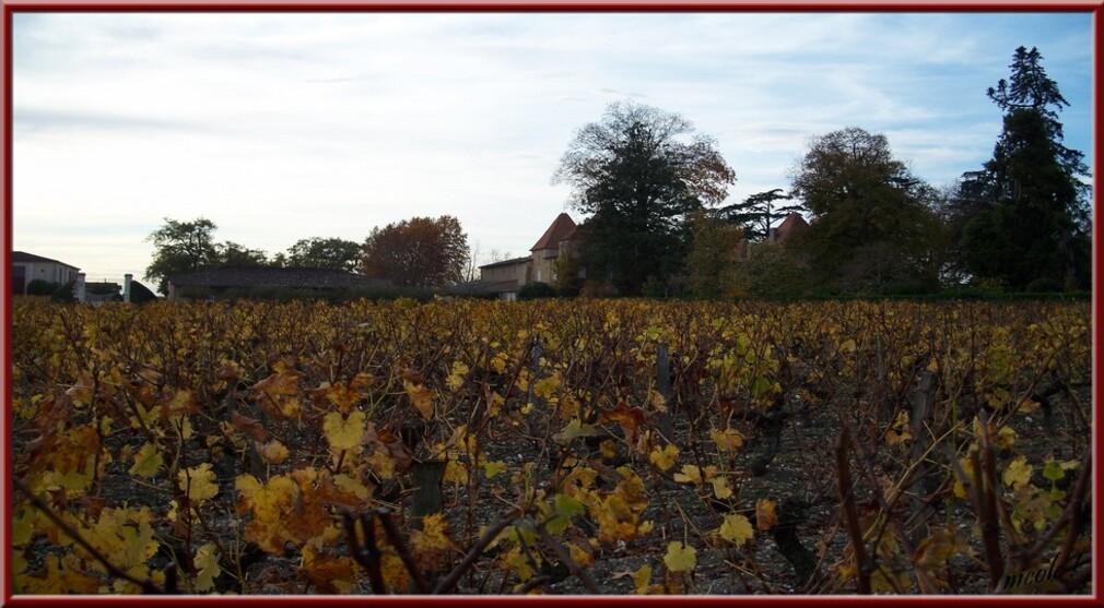 Allons dans les vignes ...
