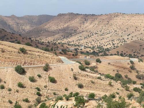 Collines plantées d'arganiers