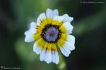 Fleurs en mélange des couleurs