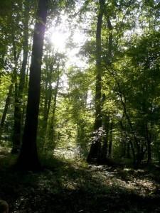 Forêt 01